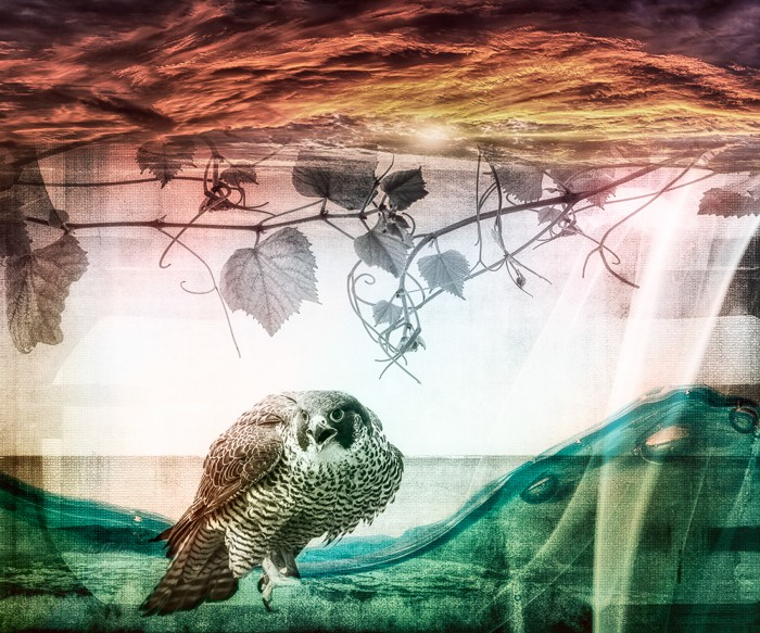 """Peregrine"" digital composition on white aluminum by Michelle DiNicola"