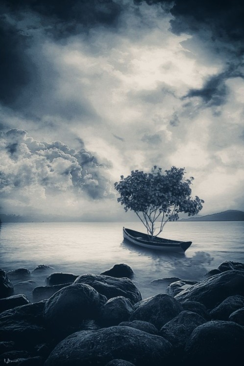 """Migratory Tree"" digital art photography by Romain Bonnet"
